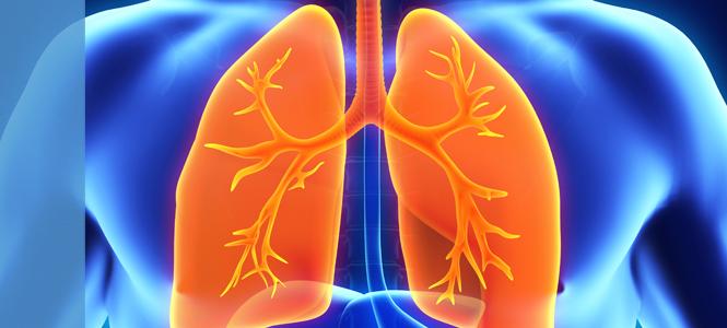 Regeneran el pulmón humano gracias a un trasplante autólogo de células madre