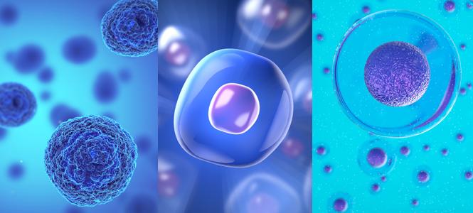 Las terapias con células madre demuestran su seguridad en niños con cáncer, epilepsia, artritis y anemia