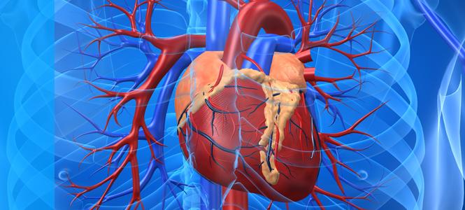 Un ensayo clínico prueba la eficacia del tratamiento del infarto agudo con células madre cardíacas