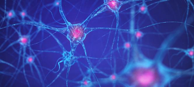 El trasplante de células madre abre una nueva vía para el tratamiento de la esclerosis múltiple