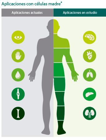 infografia-aplicaciones-celula-madre-vita-34